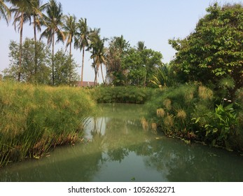 Plants growing in water