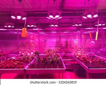 Plants Grown Under Artificial Light