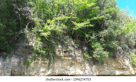 The plants holding a slump