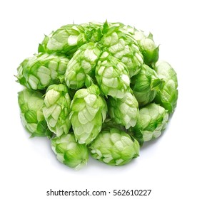 Plants hops on a white background.