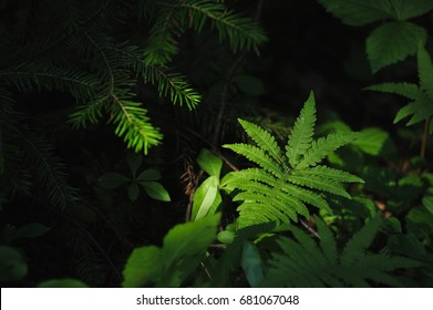 Plants of the magic forest. Fern