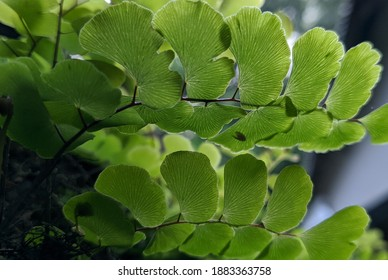 Plants are multicellular organisms in the kingdom that use photosynthesis to make their own food. - Shutterstock ID 1883363758