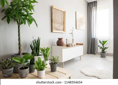 Plants next to white cupboard under burlap artwork in bright living room interior with window. Real photo