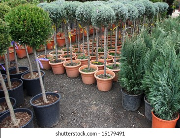 Plants in a nursery