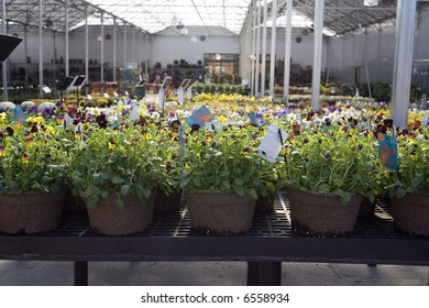 Plants in nursery