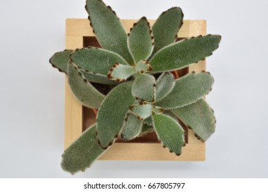 Plants in office, in a wooden box placed on a working desk