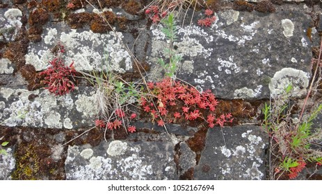 Plants on the fortress wall