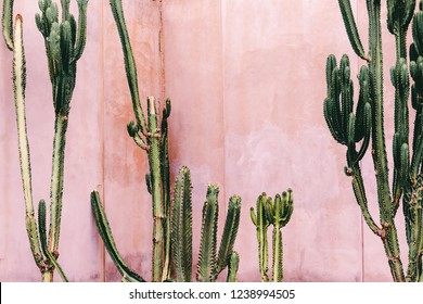 Plants on pink concept. Cactus on pink wall background. Minimal plant art