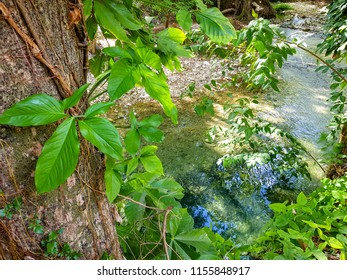 Plants on a river