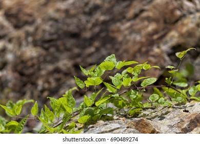 Plants on rock.