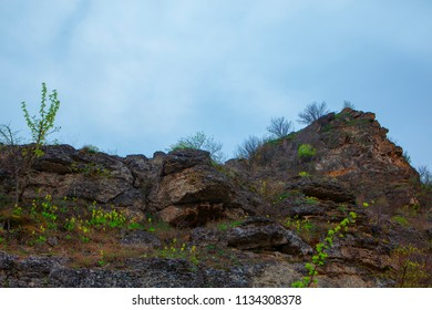 plants on the rocky cliff