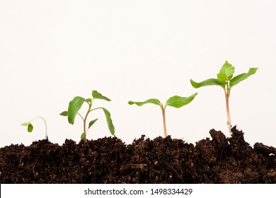 plants on soil at white background, stages of growth