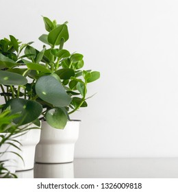 Plants on a table against white wall.