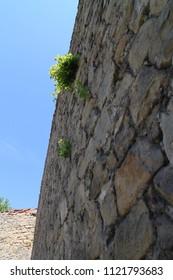 Plants on wall of Buchlov castle, Czech republic