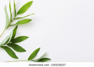 plants on white background