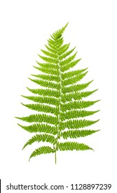 Plants on a white background isolated for insertion into the design template