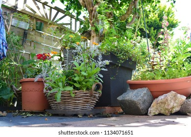Plants in plant pots with stones next to it