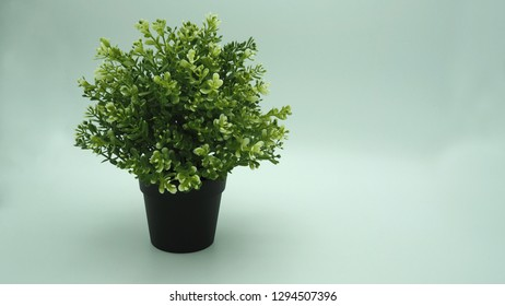 plants or plastic or fake tree on white background.