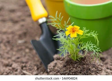 Plants and  pots with gardening tools
