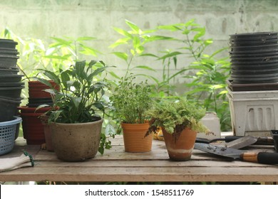 plants in pots on wooden table surround with many pots and tools