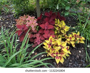 plants with red and yellow leaves