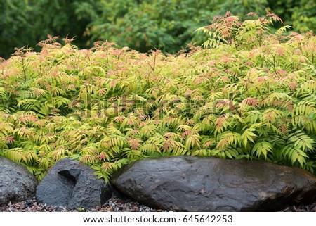 Plants Rocks Line Footpath Japanese Garden Stock Photo (Edit Now ...