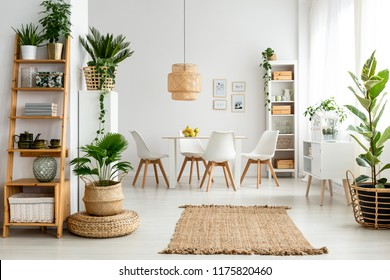 Plants and rug in natural dining room interior with white chairs and table under lamp. Real photo