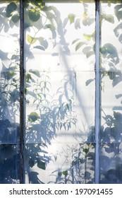 Plants shadows through greenhouse window