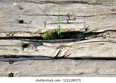 The plants at the slit of a wooden step.