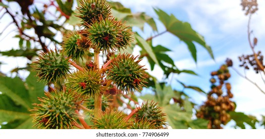 plants with spines. beautiful spiny plants against the blue sky. Wallpaper
