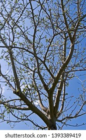 Plants: Sprouting treetop on a bright and sunny day in April