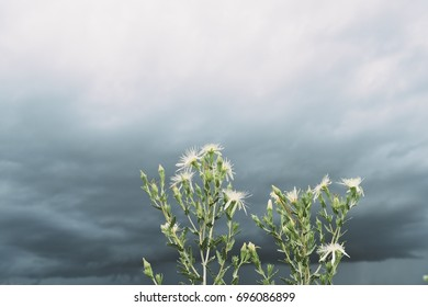 Plants with Storm on the Horizon