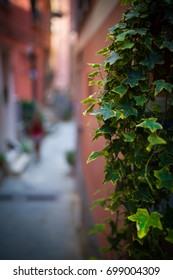 Plants and street