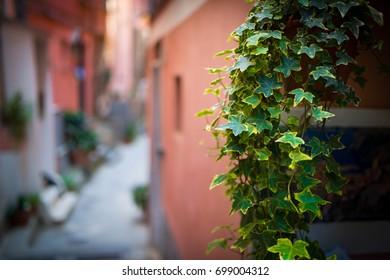 Plants and street blur