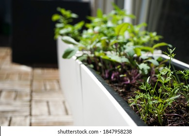 Plants such as tomatoes, herbs, oranges, beetroot, kohlrabi and sunflowers are planted on the balcony in a big city, thus protecting the environment, since fruit and vegetables no longer have to be tr