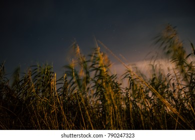 Plants swaying in the wind at night