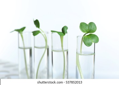 Plants in test tubes on white background, closeup