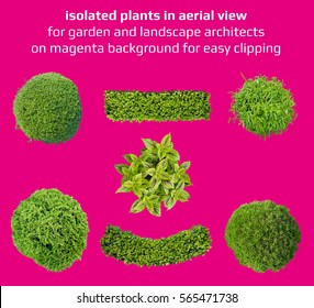plants in top view for garden and landscape architecture on isolated on magenta background for easy clipping