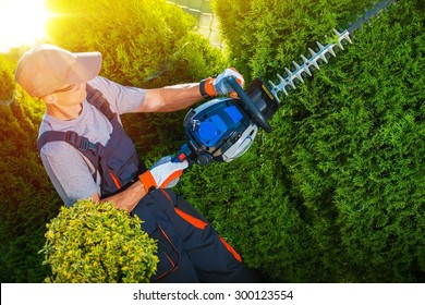 Plants Trimming Works. Gardener with Professional Gasoline Hedge Trimmer at Work.