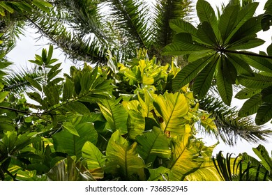 Plants in a tropical forest in Cuba