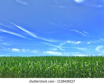 Plants under a blue sky