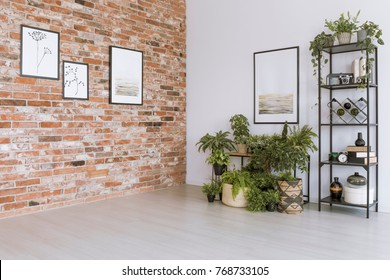 Plants under painting on white wall in simple living room with pictures on red brick wall