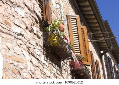 Plants under the window of a brick house (Collepino, Umbria, Italy)