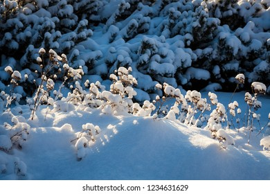 Plants at winter in sunlight