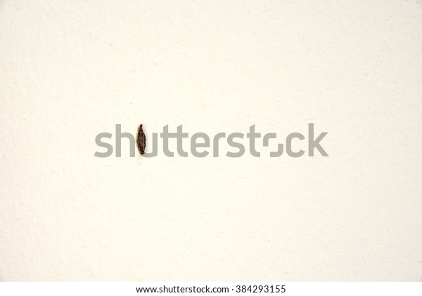 Plaster Bagworm On Old Dirty Wall Stock Photo (Edit Now) 384293155