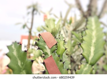 Plaster on green cactus, blur natural cactus background, bandages, bright light