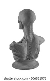 plaster statue of a naked anatomical human figure with muscles