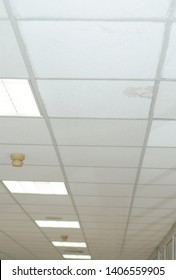 plasterboard ceiling mold damage office