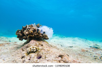 Plastic bag caught on coral. Environmental pollution of plastic in the ocean