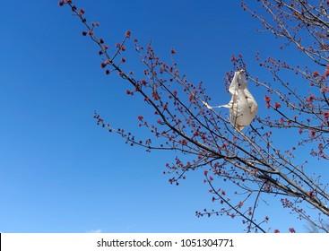 Plastic bag caught in tree. Increasing environmental problem: disposal of plastic bags.